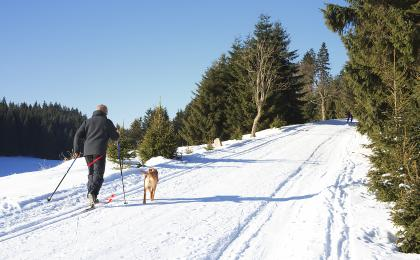Cross-country skiing near Prague